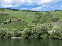 Vignoble (CORMA) Tags: allemagne deutschland germany moselle mosel 2016 europe europa vineyard vignoble weinberg