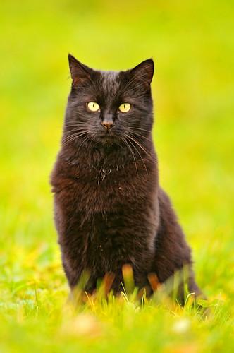 [フリー画像] 動物, 哺乳類, ネコ科, 猫・ネコ, 201101301100