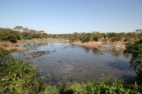 wide shot of hippo pool