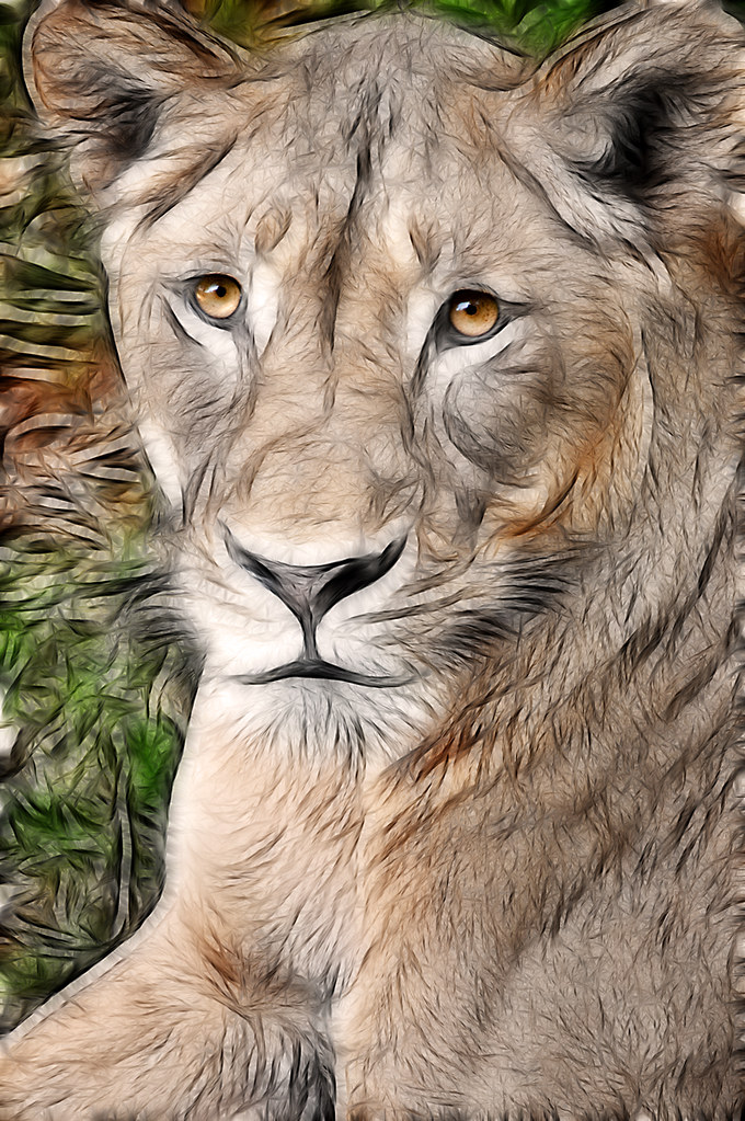 Female Lion-Fractalius 4-0 F LR 9-18-10 J197