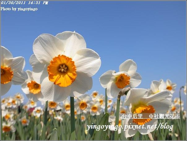台中后里_中社光觀花市20110130_R0017622