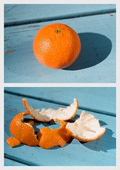 To Suck the Orange Dry (La Branĉaro) Tags: orange macro film fruit 1 picnic fuji dof bokeh quote philosophy motto olympus depthoffield h 35mmfilm 400 pro fujifilm shallow om peel clementine om1 orangepeel skyblue picnictable creed electricblue peelings 400h ingersoll humanism secularhumanism secularhumanist pro400h zuikolens 50mmf35macro robertgreeningersoll zuikomacro robertingersoll orangepeelings shallodepthoffield personalcreed