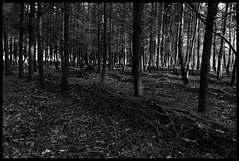 Forest (Maurice Asseraf) Tags: christmas light shadow bw sun white black tree forest nikon walk sunday d70s shade 17 luxembourg dim 50 tamron beautifull