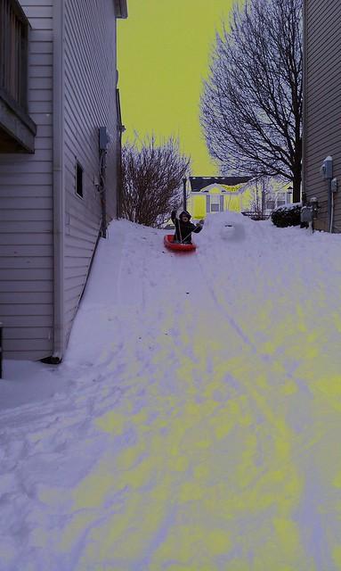 Otto loves sledding