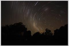 Star Trails (T. Harper) Tags: longexposure trees night canon stars silhouettes australia nsw startrails 1hour ulmarra 50d sigma1020mmf456exhsm