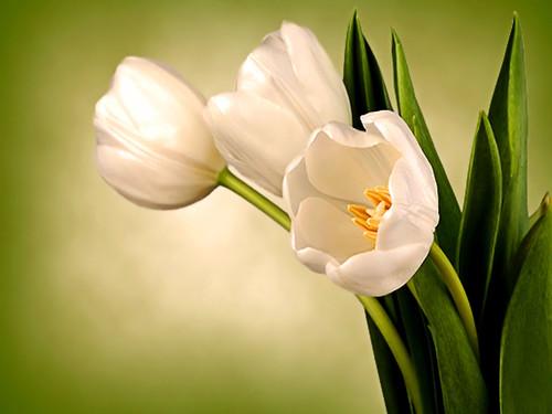 High Resolution Wallpaper flowers