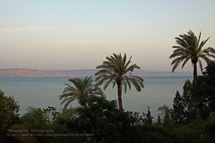 Sea of Galilee, late evening at the lake (blauepics) Tags: trees light sunset sea lake water palms landscape see evening licht israel wasser sonnenuntergang palestine galilee east middle kinneret landschaft osten bume palstina palmen abendstimmung tabgha genezareth mittlerer gennesaret