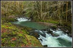 Layng Creek (JSB PHOTOGRAPHS) Tags: road trees green water leaves oregon creek forest leaf moss stream grove cottage falls 17 service pinard layng moonfalls spiritfalls layngcreek