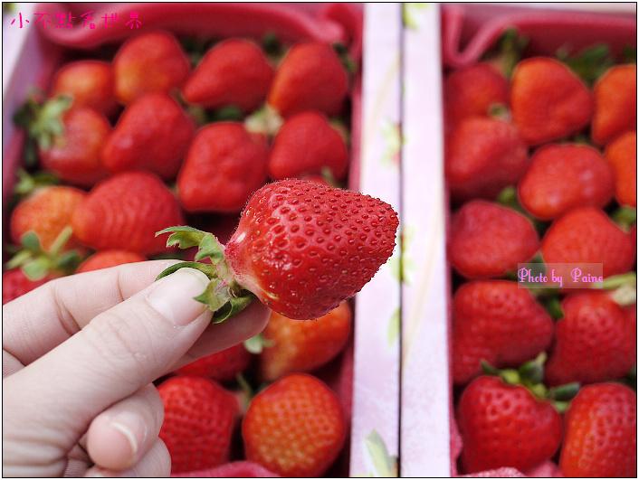 甜柿先生-草莓 (6).JPG