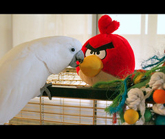 -::- Angry Bird! -::- (-::-Mr.AD-::- *Uae*) Tags: red white bird yellow mobile umbrella toy toys parrot polish angry cockatoo ltd commonwealth rovio cadge