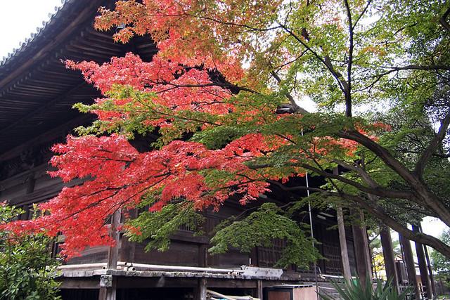 20101114_083524_西大寺