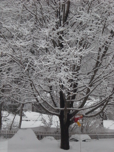 Red Swing in Snow Tree