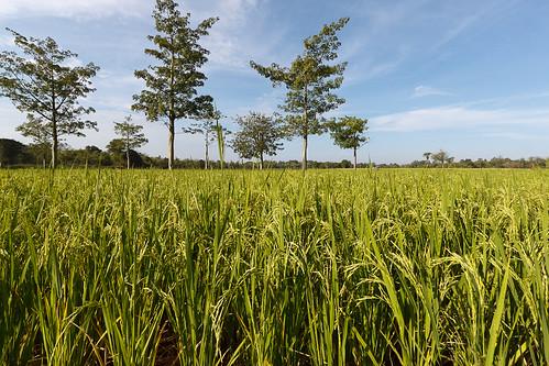 Koh Paen, Kampong Cham - 18