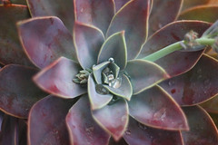 49~100 (maxwell.dunn) Tags: plant film water rain outside succulent interesting explore frontpage ooosucculentfancywordp