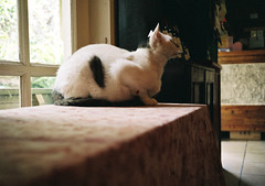 Crazy Zhang (paranoidcat) Tags: film animal cat fuji olympus 400 xtra 35rc