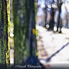 Walking along the avenue - HDR - Meyer Optik 50mm f1,8 M42- Cuneo - Italy - Viale degli Angeli (Margall photography) Tags: city winter italy tree photography moss italia bokeh perspective marco mm f18 50 avenue cuneo hdr meyer degli angeli viale optik galletto margall