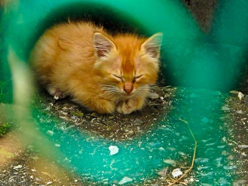 IMG_0879 kitten