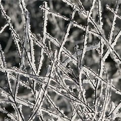woven-branches-frost
