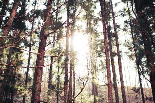 フリー写真素材, 自然・風景, 森林, 樹木, 日本,