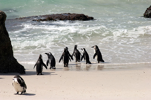 Penguins at Boulder Bay South Africa