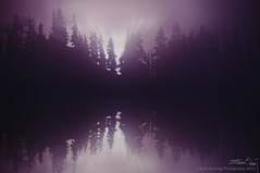 Foggy Trees (Evan Gearing (Evan's Expo)) Tags: trees canada fog photoshop whistler nikon 18200 cs4 d300s evangearingphotography evansexpo