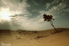 II..Desert Story..II #EXPLORE# (Faisal Alzeer) Tags: nikon desert بر faisal فيصل الرياض sigma1020 العربية صحراء المملكة شجر نيكون السعوديه fnz d300s الزير alzeer abonasser ابوناصر دي300اس ديزيرت