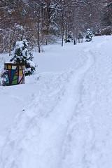 stritz-4087.jpg (jstritz) Tags: winter trail fhsp