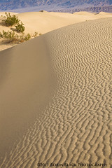 Morning Light on Mesquite Dunes, Death Valley National Park (Robin Black Photography) Tags: light abstract southwest texture lines contrast golden nationalpark sand beige warm desert dunes sandy curves ngc scenic shapes zen deathvalley ripples iconic minimalist naturesbest nationalgeographic stovepipewells mesquitedunes outdoorphotographer robinblackphotography