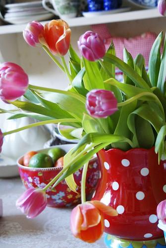 tulips go wild