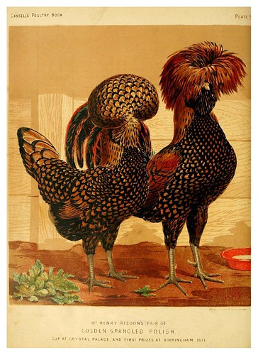 006--The illustrated book of poultry. With practical scheduals…1873-Lewis Wright