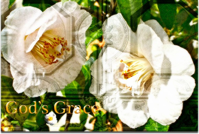 God's Grace white flowers