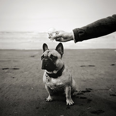 suddenly, miles had a very bright idea (manyfires) Tags: ocean sea portrait blackandwhite bw dog film beach animal lightbulb mediumformat idea washington sand funny canine hasselblad pacificocean longbeach pacificnorthwest frenchbulldog miles shorline hasselblad500cm 500px animalscape highqualitydogs