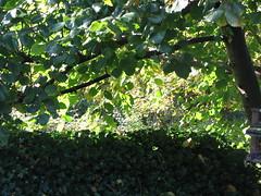 """Efterårsfarver • <a style=""""font-size:0.8em;"""" href=""""http://www.flickr.com/photos/53551333@N05/5525921376/"""" target=""""_blank"""">View on Flickr</a>"""