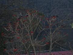 IMG_1054 (jsnyder624) Tags: nepal pokhara sarangkot
