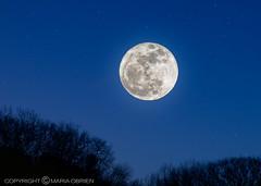 Lunar Perigee - aka - Supermoon (mariaaobrien) Tags: blue trees sky moon stars lunar astrology perigee canon7d