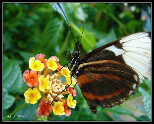 In the butterfly garden. This was one of my favorite things this weekend :)