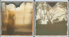 come in. (ten minutes) Tags: trees sunset two cat polaroid sx70 diptych slr680 px100 autaut patricktobin panpola impossibleproject px600uv