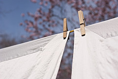 Spring must have sprung, the laundry is out! (Trapac) Tags: blue white bristol wooden spring nikon blossom linen sunny fresh clean laundry hanging pegs drying corners washingline cotham nikkor3570mm d700 hangingoutthewashing nikond700 flickrcollectionongetty
