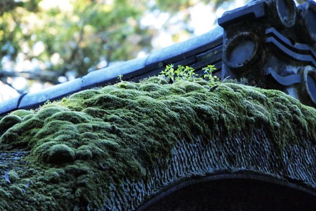 20101119_091707_石上神社_摂社出雲建雄神社拝殿(国宝)