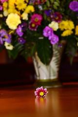 lost flower (derek e salvus) Tags: flowers white flower yellow closeup purple lone