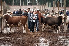 Stripes (niklausberger) Tags: china uighur xinjiang kashgar bazaar sundaymarket kashi animalmarket lifestock lifestockmarket
