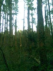 20090205(003) (naialaka) Tags: natura basoa belarra baserria berdea paisajea