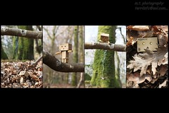 danbo's rope swing disaster (gigsnapper.com) Tags: tree leaves woods ropeswing danbo canon60mmefsmacrolens revoltech canoneos500d amazonjp danboard revoltechdanbo