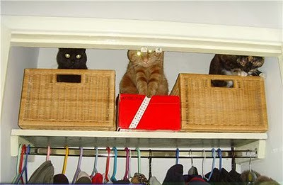 organize_your_cats_13
