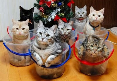 organize_your_cats_02