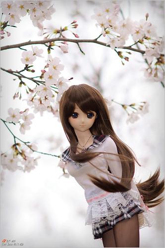 DSC04956 by leafsama