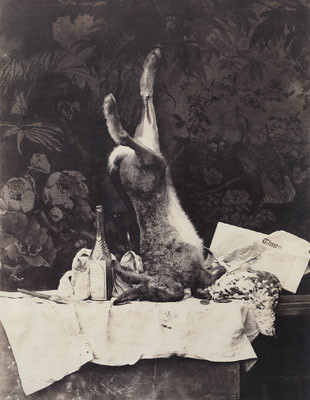 rabbit camille silvy