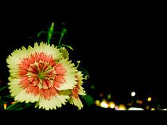 Quinta (lu_bezerra) Tags: flower de o que nome quinta sei aniversrio no presente resistente florzinha