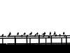 مرغ دریایی (ferii malek) Tags: bridge black bird iran seagull ایران ahvaz مرغ پل اهواز دریایی سیاه سفید