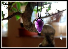 The Amethyst (Paul M. Kelly) Tags: light tree home purple bonsai hanging amethyst gem